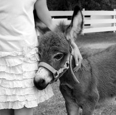 Child and Baby Miniature Donkey - Friends - Black and White - Country - Farm Animals - Wall Decor - 8 x 8 - Fine Art Photo