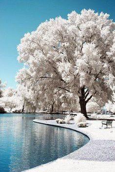 Tree ~ Dreamy Nature