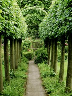 Pleached Lime Trees Either Side of Pathway Leading to Gate, at Alderley Grange, Gloucestershire Photographic Print by Mark Bolton - AllPosters.co.uk