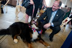 Rep. Mark Critz, D-Pa., pets Ilsa, a Bernese Mountain Dog, who belongs to Critz's former colleague Colette Marchesini, during a Pets for Patriots event in Eastern Market. The program connects at-risk pets with military veterans and service members. (Photo By Tom Williams/CQ Roll Call)