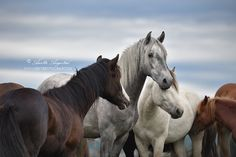 Young Stallions by Hestefotograf on DeviantArt