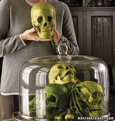 halloween skulls under glass Halloween Specimen Jars