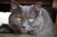 Te veo... #cat