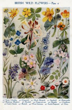 vintage print of British Wild Flowers by theStoryOfVintage on Etsy