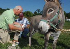 Sidney Nicely of Virginia Prosthetics examines the artificial hoof he made for Stitches the donkey, as Walter Nelson, the donkeys' handler looks on.