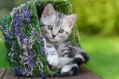 a basket with a kitty
