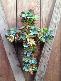 Living Succulent Cross Wreath