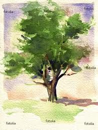 watercolor tree...this pin goes to google search results for trees