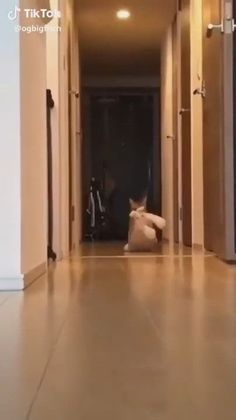 66 Ideas Funny Animals Memes Kittens For 2019 Cute Funny Animals, Cute Baby Animals, Funny Cute, Animals And Pets, Cute Cats, Funny Birds, Fluffy Animals, Top Funny, Cute Animal Videos