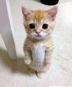 Puss lost his boots!