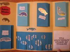 Kindergarten Lapbook examples