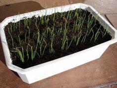 7 Q/R sur les soucis des semis en intérieur