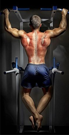 Back To Basics: Your Blueprint For Building A Bigger Back! - Bodybuilding.com