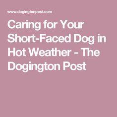 Caring for Your Short-Faced Dog in Hot Weather - The Dogington Post