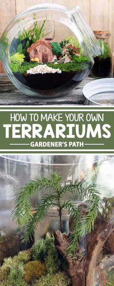 Mini Terrarium, How To Make Terrariums, Succulent Terrarium, Making A Terrarium, Best Terrarium Plants, Terrarium Wedding, Succulent Plants, Planting Succulents, Container Gardening