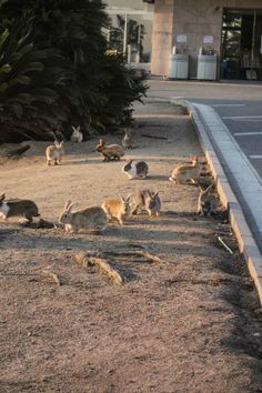 Ōkunoshima, Japan. It's known as Rabbit Island and that's because it's inhabited by hundreds of adorable bunnies.