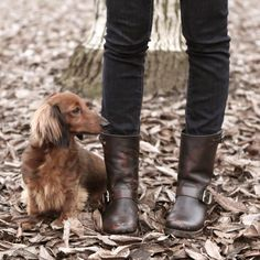 Frye Veronica Shortie Sz 8.5 In Dark Brown Boots. Get the must-have boots of this season! These Frye Veronica Shortie Sz 8.5 In Dark Brown Boots are a top 10 member favorite on Tradesy. Save on yours before they're sold out!