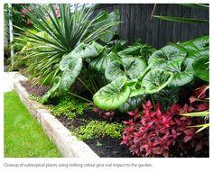 subtropical garden design - Google Search