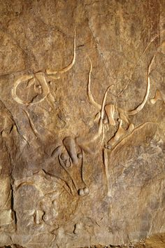 Polished cattle engravings - Early Hunter Period. Tegharghart, south of Djanet, Tassili n'Ajjer, Algeria