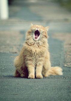 need a lil catnap