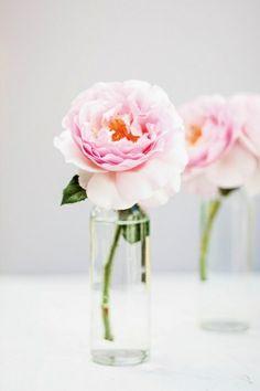 Roses brighten every kitchen corner!
