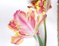 "Check out new work on my @Behance portfolio: ""Tulipe"" http://be.net/gallery/52837945/Tulipe"