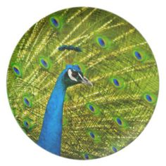 Eye-spotted Peacock Plates