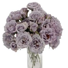 FiftyFlowers.com - Antique Lavender Spray Roses Bulk