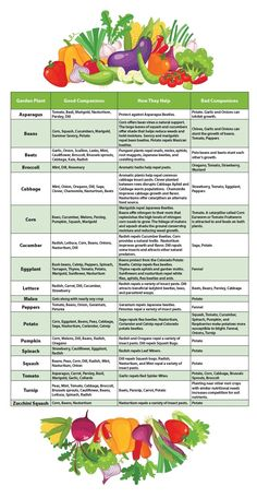 Vegetable Garden Companion Plants Chart_Good Companions, How They Help and Bad C. Vegetable Garden Companion Plants Chart_Good Companions, How They Help and Bad Companions, Backyard Vegetable Gardens, Container Gardening Vegetables, Vegetable Garden Design, Veg Garden, Planting Vegetables, Garden Care, Growing Vegetables, Indoor Garden, Vegetable Companion Planting