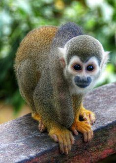 Amazon rain forest monkey