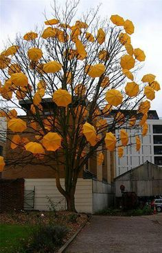 dad says money doesn't grow on tree's so... does umbrella's?