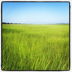 Masonboro Island Marsh