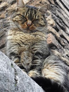 ...I'm watching you!... (cat on a wall in Rome)