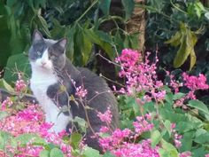 E Vejo Flores em vc !!