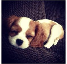Love Puppies & Kittens? Then Join Our Facebook Group   Click To Join  >> https://www.facebook.com/groups/Dogs4Eva/