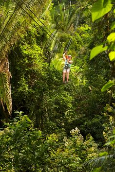Zipline - Jaguar Paw Jungle Resort, Cave Branch River, Belmopan, Belize