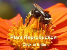 Plant Reproduction Click to Enter INSTRUCTIONS Ensure that you complete all activities and worksheets when instructed to do so. The pad icon will indicate.