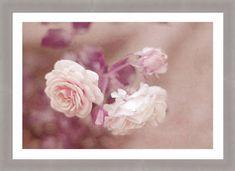 Jenny Rainbow Fine Art Photography Framed Print featuring the photograph La Vie en Rose - Nostalgic Roses by Jenny Rainbow Framing Photography, Fine Art Photography, All Flowers, Beautiful Flowers, Rose Frame, Home Art, Fine Art America, Artsy, Roses
