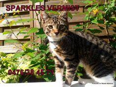 SPARKLES VERMIST TE NINOVE !!!  Sparkles is een kater van 1 jaar en is vermist in de Fernand Tavernestraat nr 3 te Ninove. Wie hem gezien heeft kan telefoneren naar 0476/38 45 71 of 0488/24 45 62