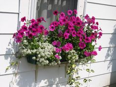 hot pink fuchsia and white flower window box