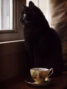 Black Cat and a cup of tea. What could be better?