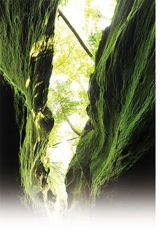 苔の洞門とは 苔の洞門 支笏湖洞爺国立公園