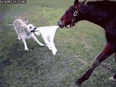 Dog: Take it...! Take it..!  Hahahahahaa.... Horse: You dum asshole...com here, I will kill U..!