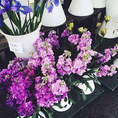 flowers, purple, and tumblr resmi