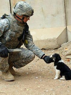 """O filhote de cachorro e do Soldado  """"Um soldado do exército dos Estados Unidos com 4 Brigade Combat Team, terceira divisão de infantaria pets um filhote de cachorro adotado pela delegacia de polícia iraquiana em Musayyib Musayyib, Iraque."""