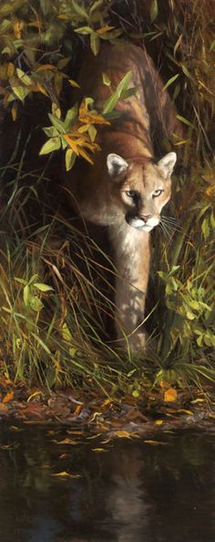 Cougars:  #Cougar ~ Kyle Sims Art: Down for Respite: oil, 40 x 16 in.