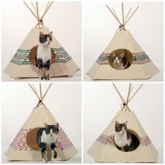 Casas originales para gatos – Tienda India, Tipi, Pirámide