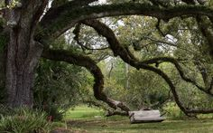 Rest awhile, it's Sunday in beautiful Louisiana and most of the world. Photo by Coleen Perilloux Landry.