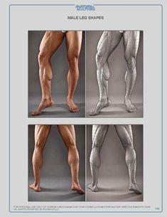 ANATOMY FOR SCULPTORS #MuscleAnatomy