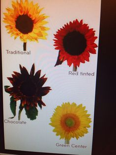 Types of sunflowers!